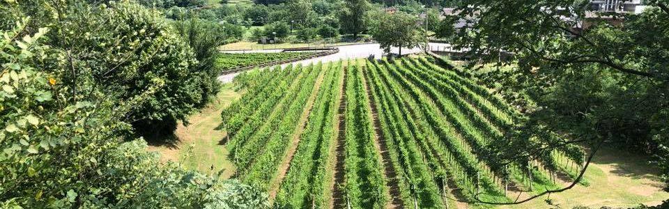 Azienda vinicola Vibù