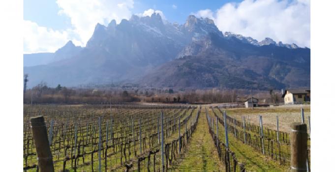 La zonazione vitivinicola in ambiente montano – Seminario online 27 maggio 2021 dalle 17 alle 18.