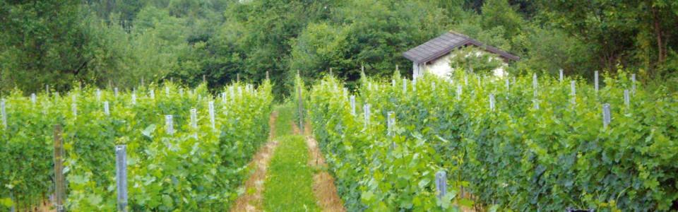 Azienda Agricola Le Terrazze